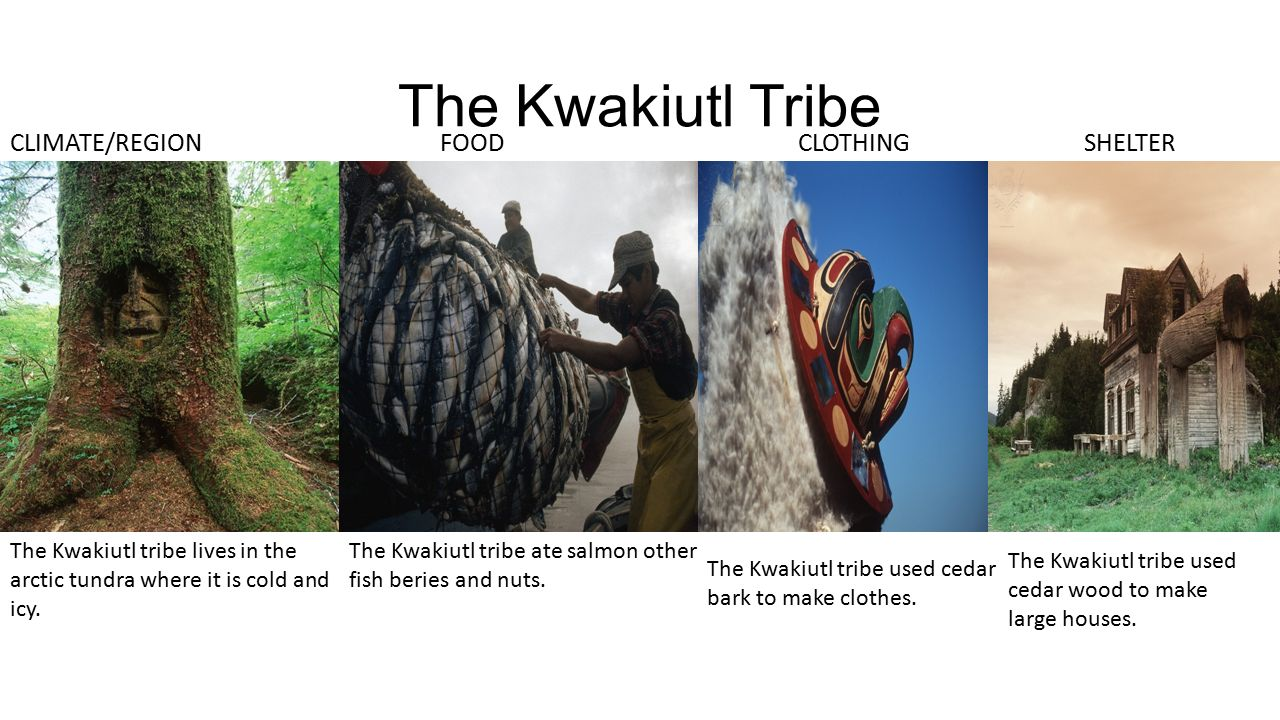 Native American Tribes By : Hoyt - ppt download