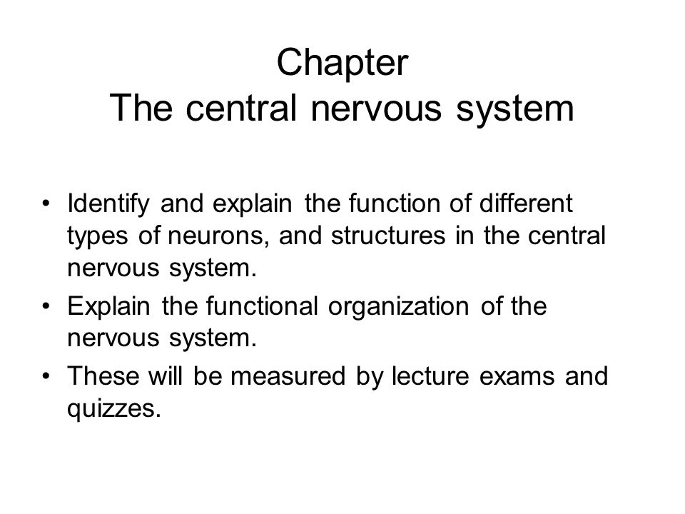 Chapter The central nervous system - ppt video online download