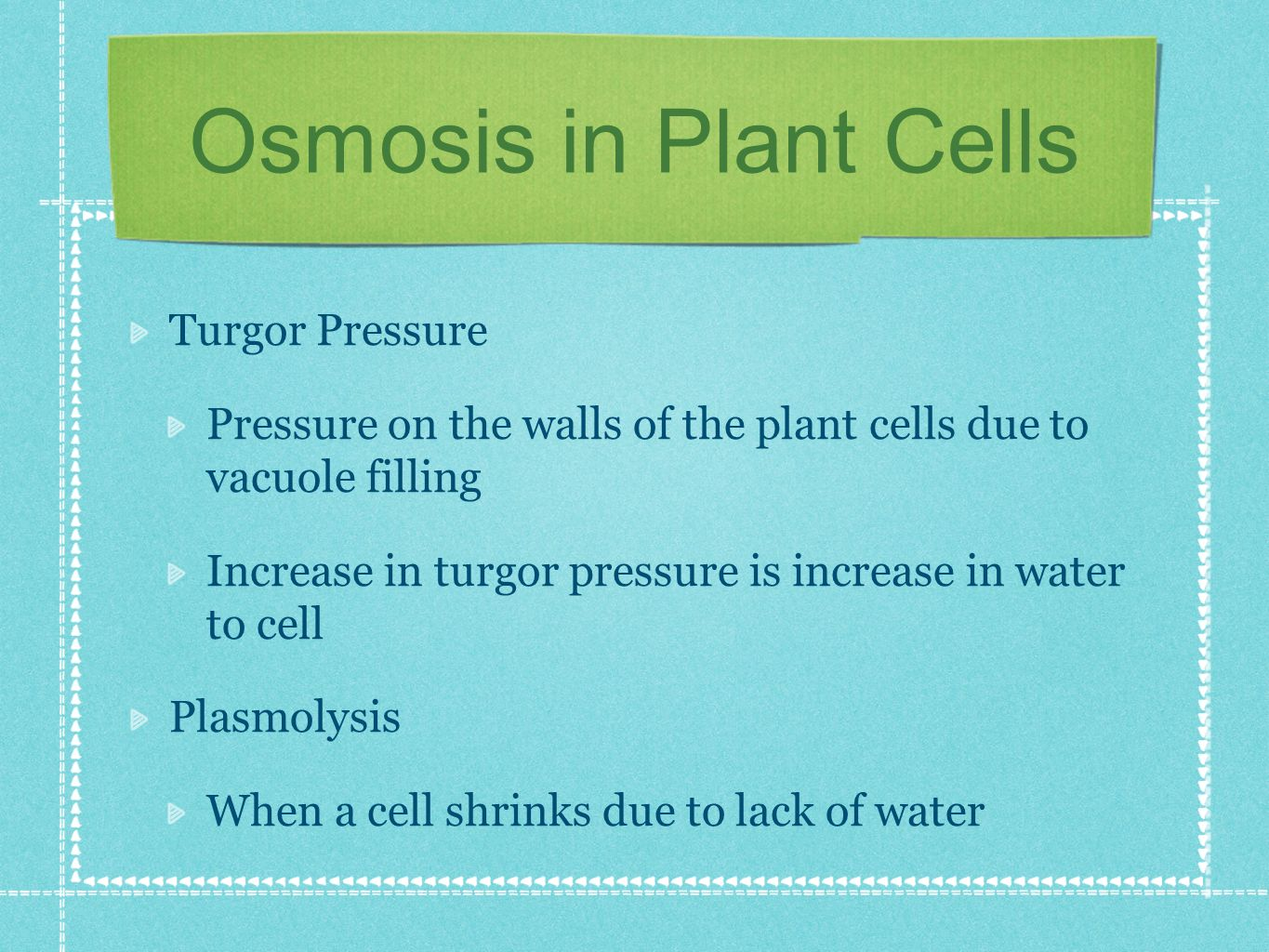 Osmosis in Plant Cells Turgor Pressure