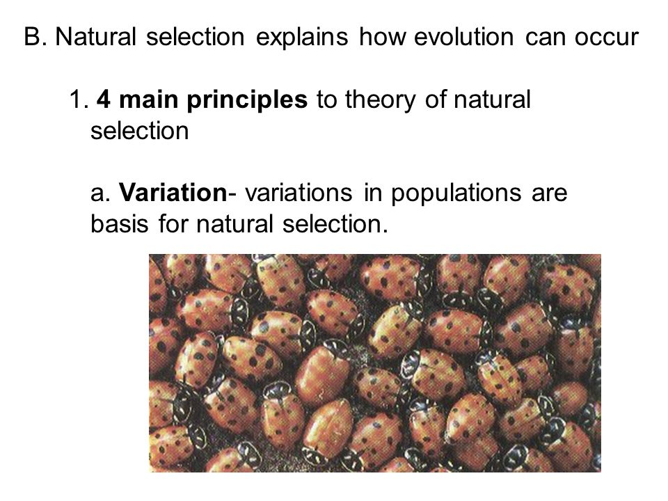 Natural Selection Creates Organisms That