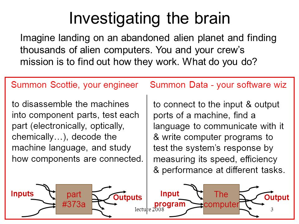 Investigating the brain