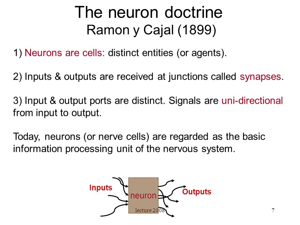 The neuron doctrine Ramon y Cajal (1899)
