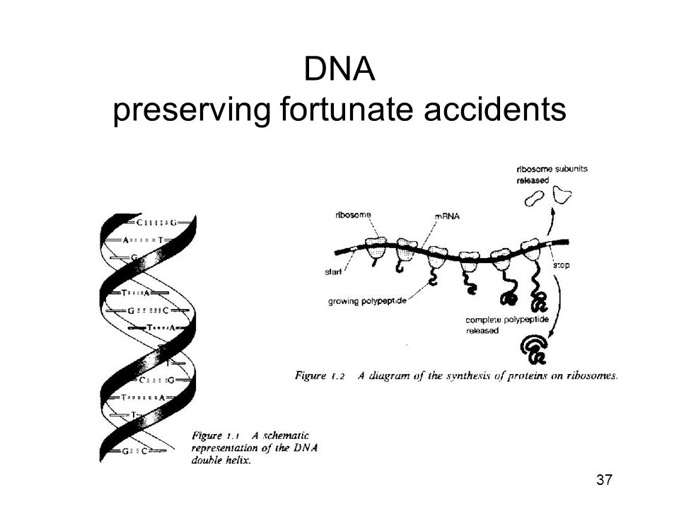 DNA preserving fortunate accidents