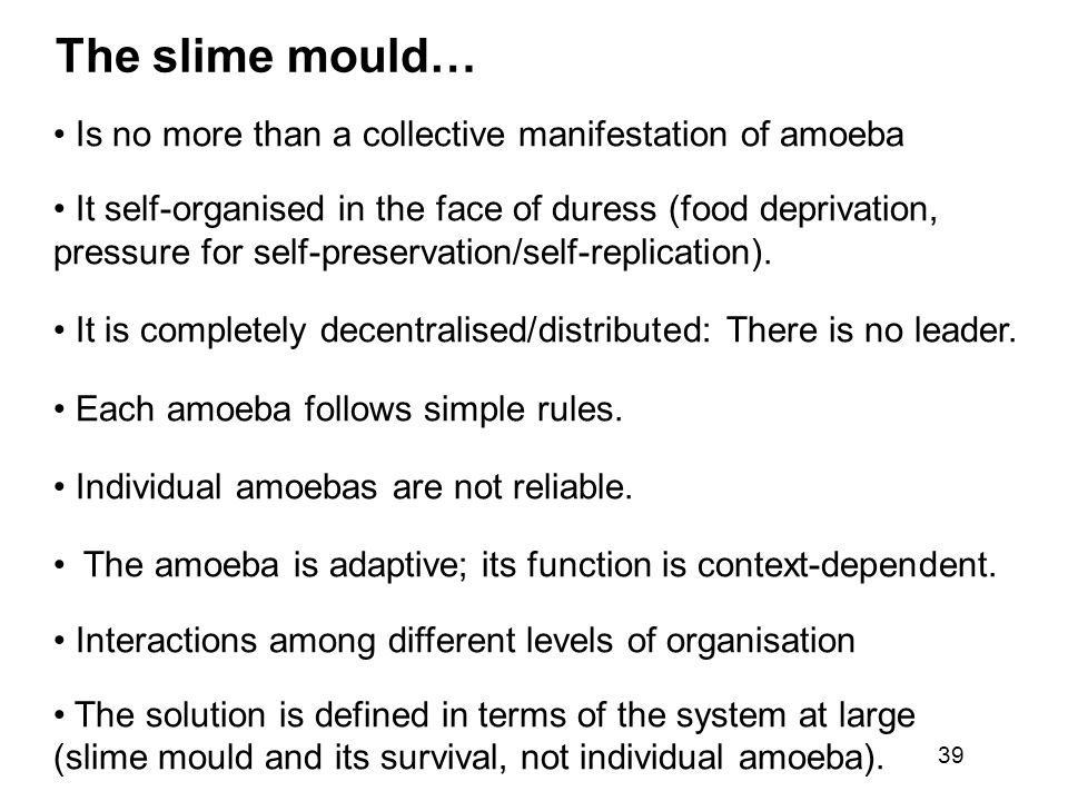 The slime mould… Is no more than a collective manifestation of amoeba