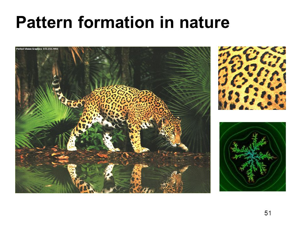 Pattern formation in nature
