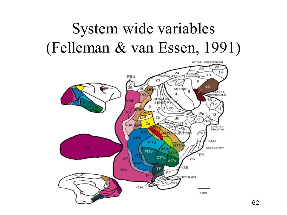 System wide variables (Felleman & van Essen, 1991)
