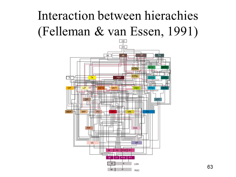 Interaction between hierachies (Felleman & van Essen, 1991)