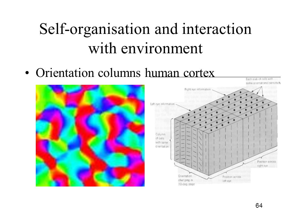Self-organisation and interaction with environment