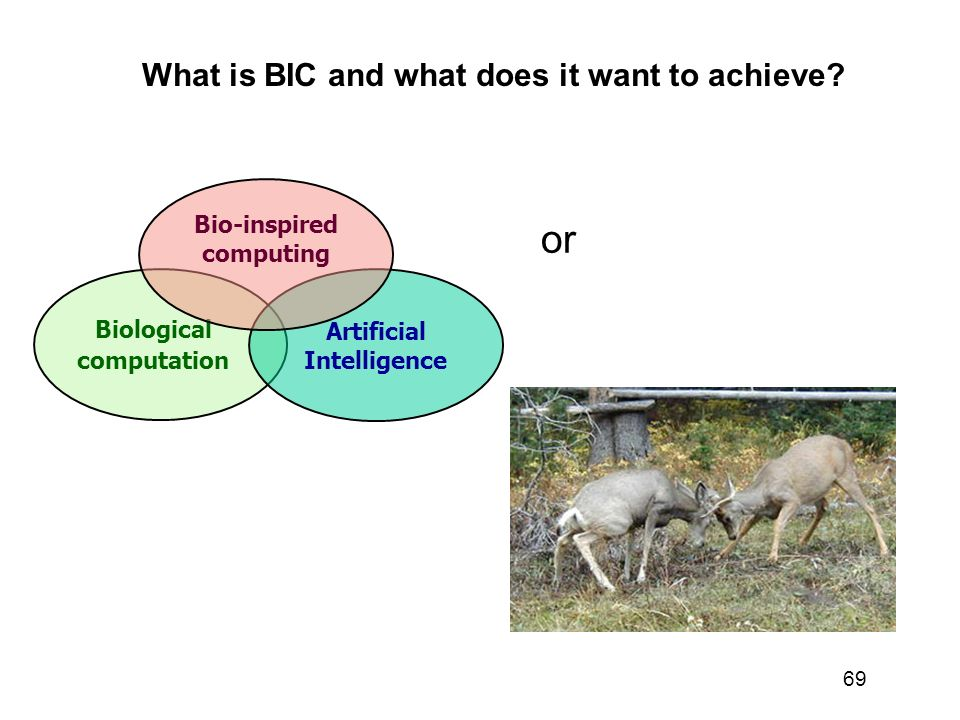or What is BIC and what does it want to achieve Bio-inspired