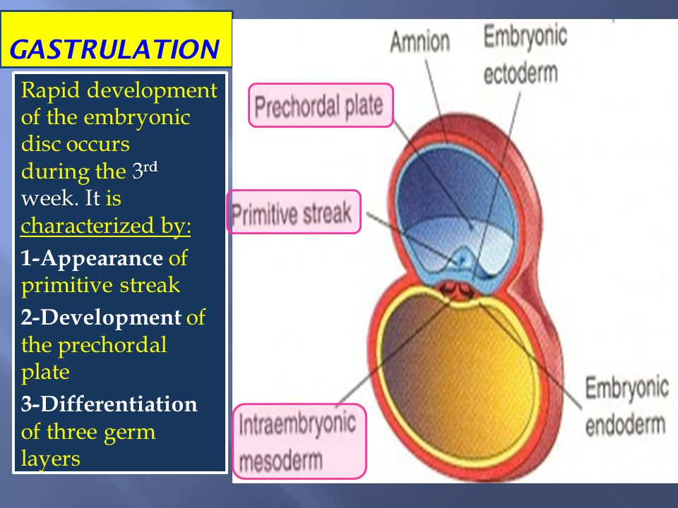 Gastrulation  Definition and Types  Biology Dictionary