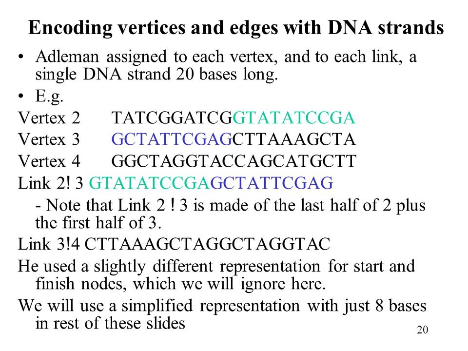 Encoding vertices and edges with DNA strands