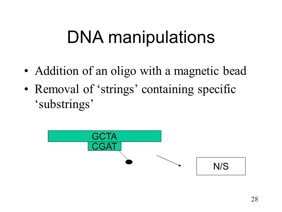 DNA manipulations Addition of an oligo with a magnetic bead