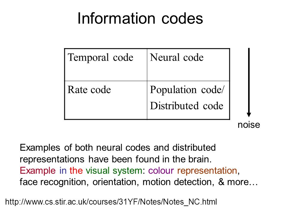 Information codes Temporal code Neural code Rate code Population code/