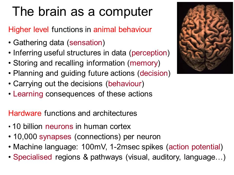 The brain as a computer Higher level functions in animal behaviour