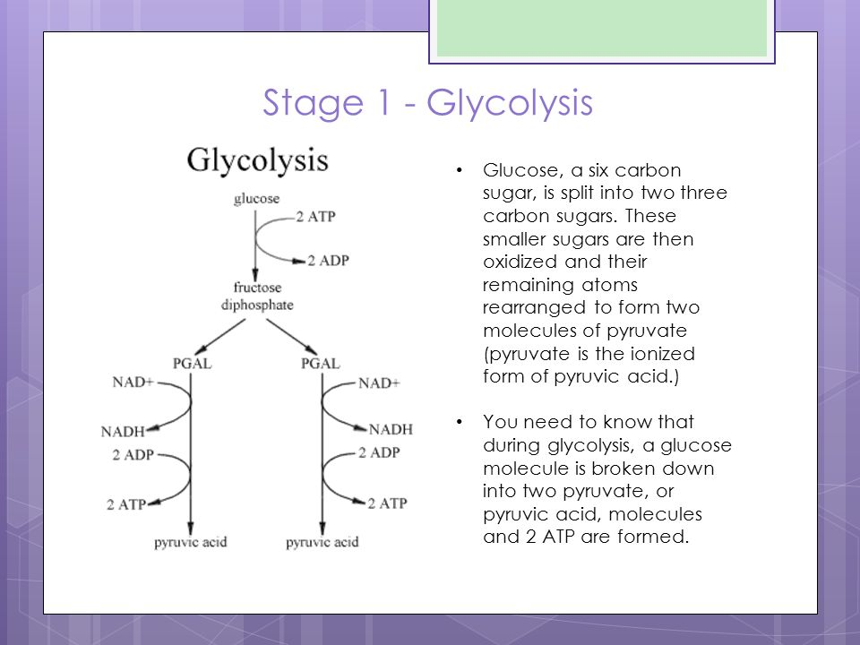 The Krebs Cycle Biology 11 Advanced - ppt video online download