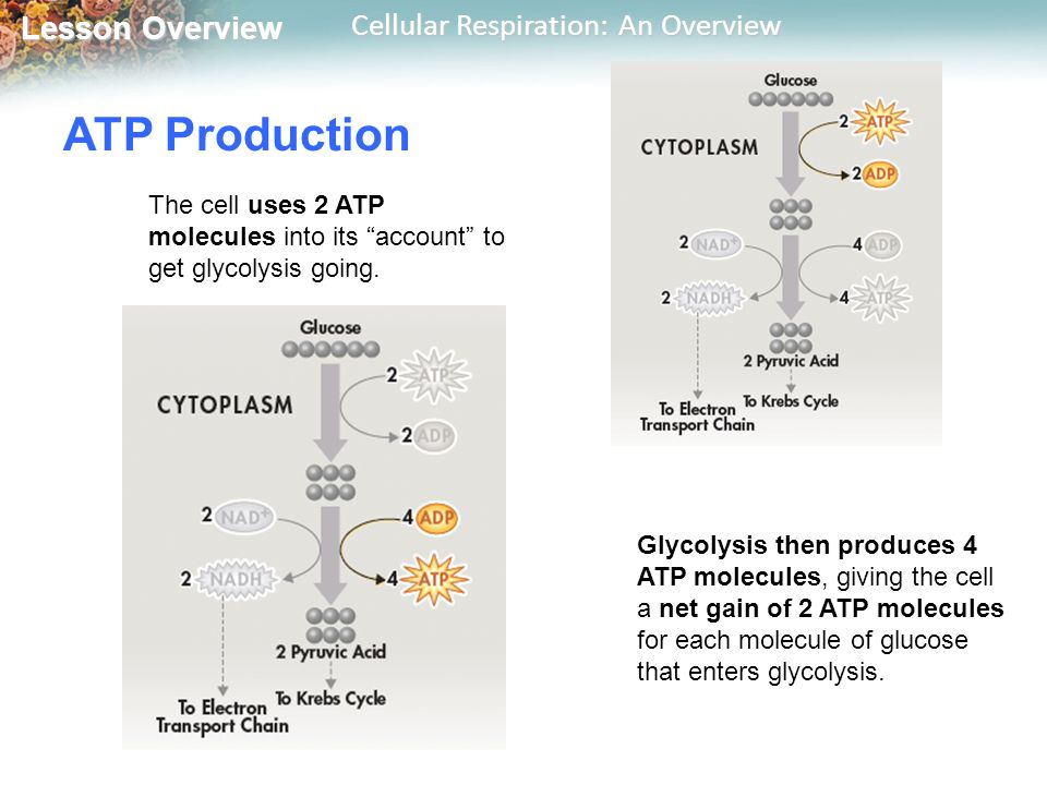 9.1 cellular respiration an overview pdf