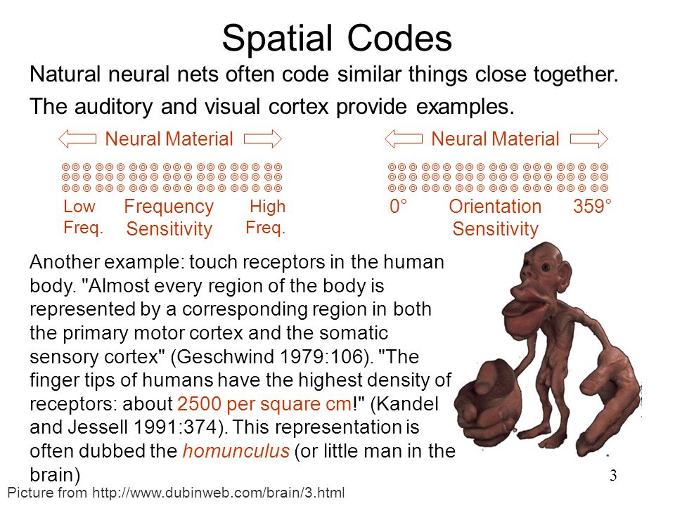 Spatial Codes Natural neural nets often code similar things close together. The auditory and visual cortex provide examples.