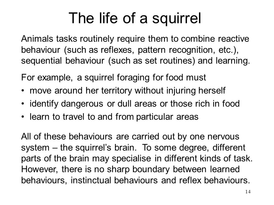 The life of a squirrel