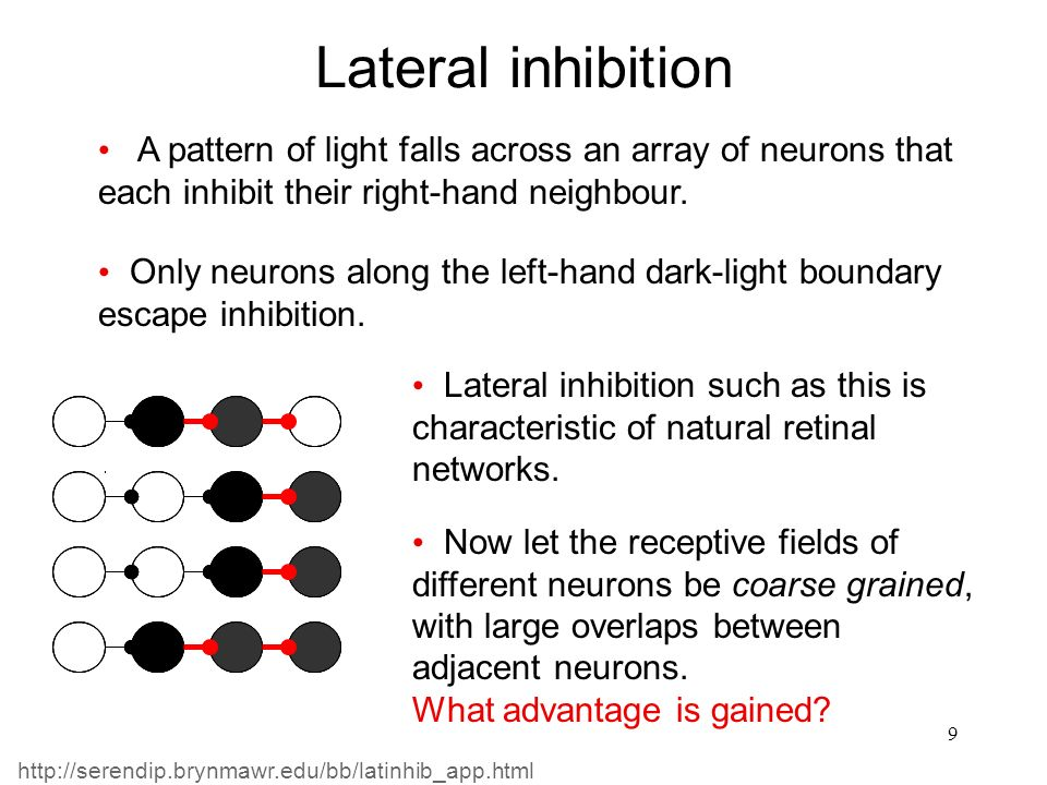 Lateral inhibition A pattern of light falls across an array of neurons that each inhibit their right-hand neighbour.