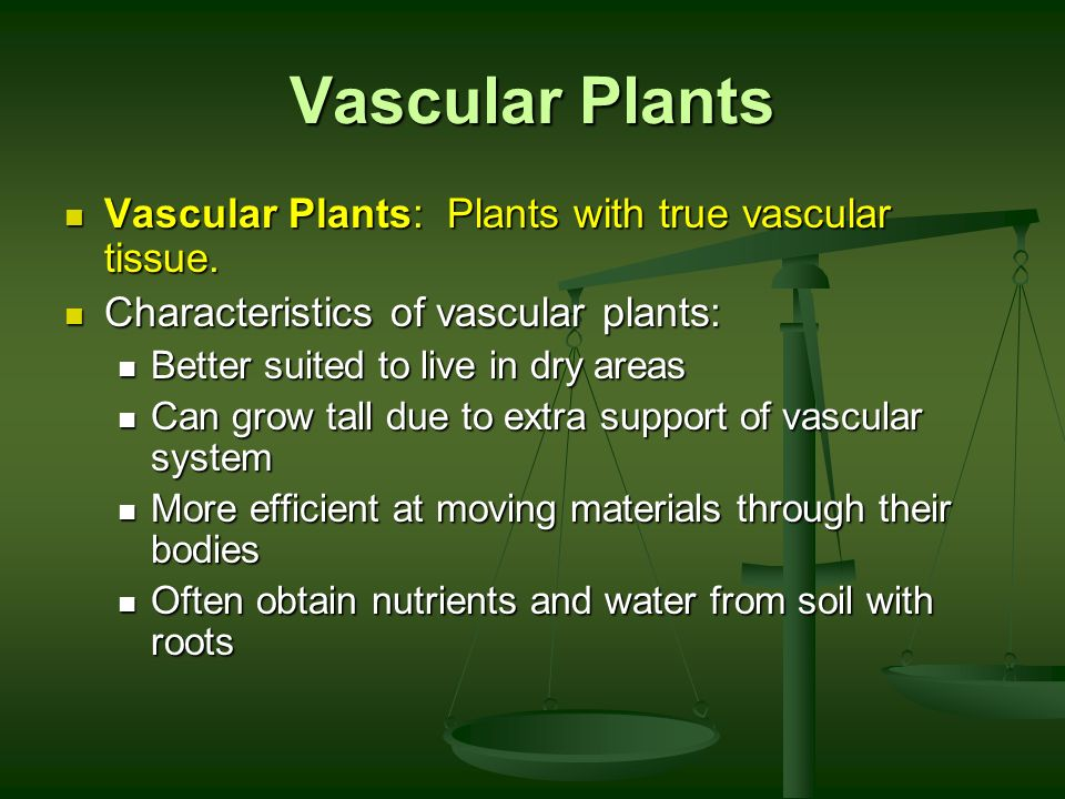 Vascular Plants Vascular Plants: Plants with true vascular tissue.