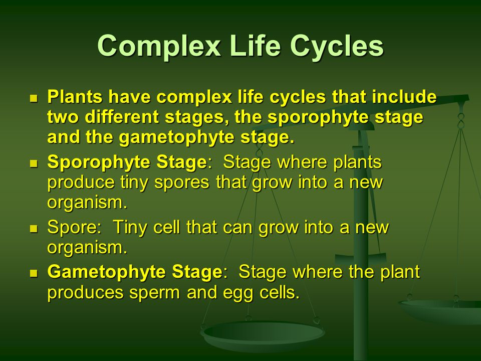 Complex Life Cycles Plants have complex life cycles that include two different stages, the sporophyte stage and the gametophyte stage.