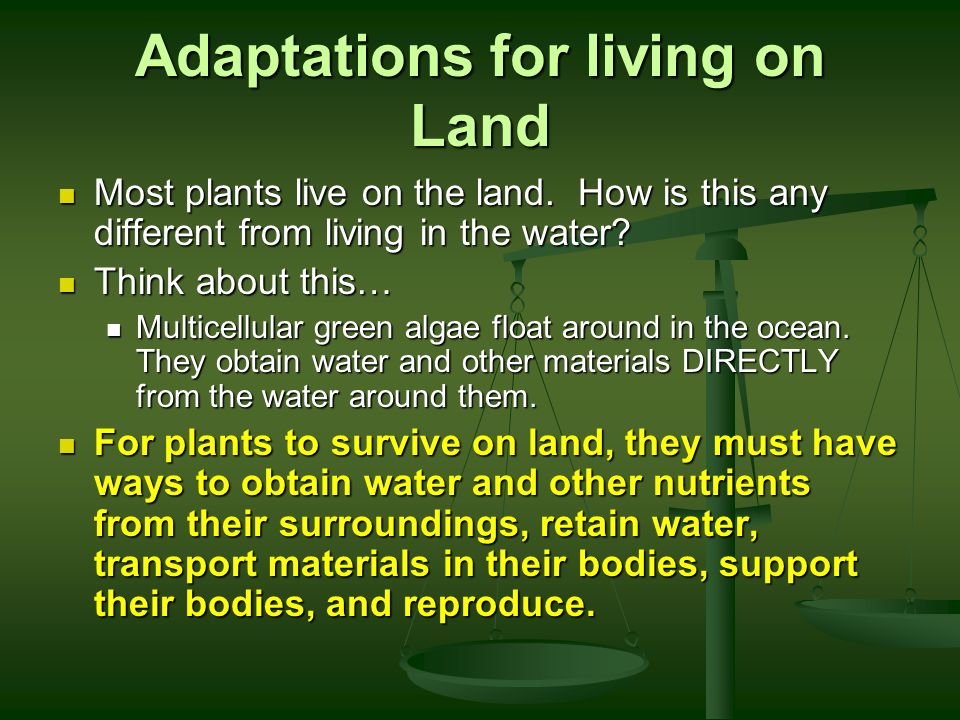 adaptations plants had make able survive land Gymnosperms were among the first plants to colonize the land, and adaptations to what are gymnosperm adaptations plants, gymnosperms require water to survive.