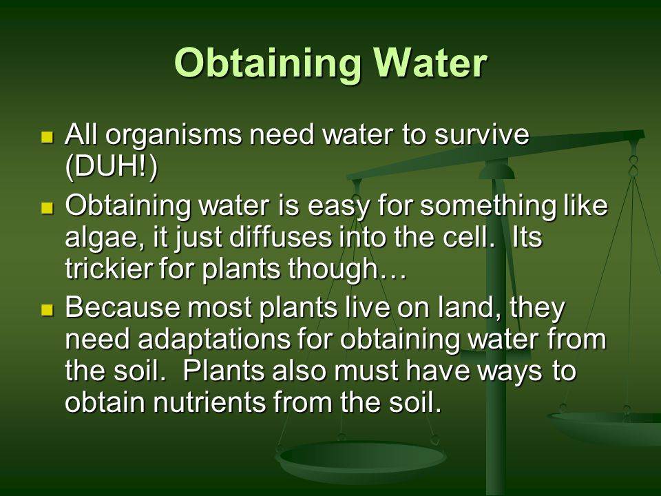 Obtaining Water All organisms need water to survive (DUH!)