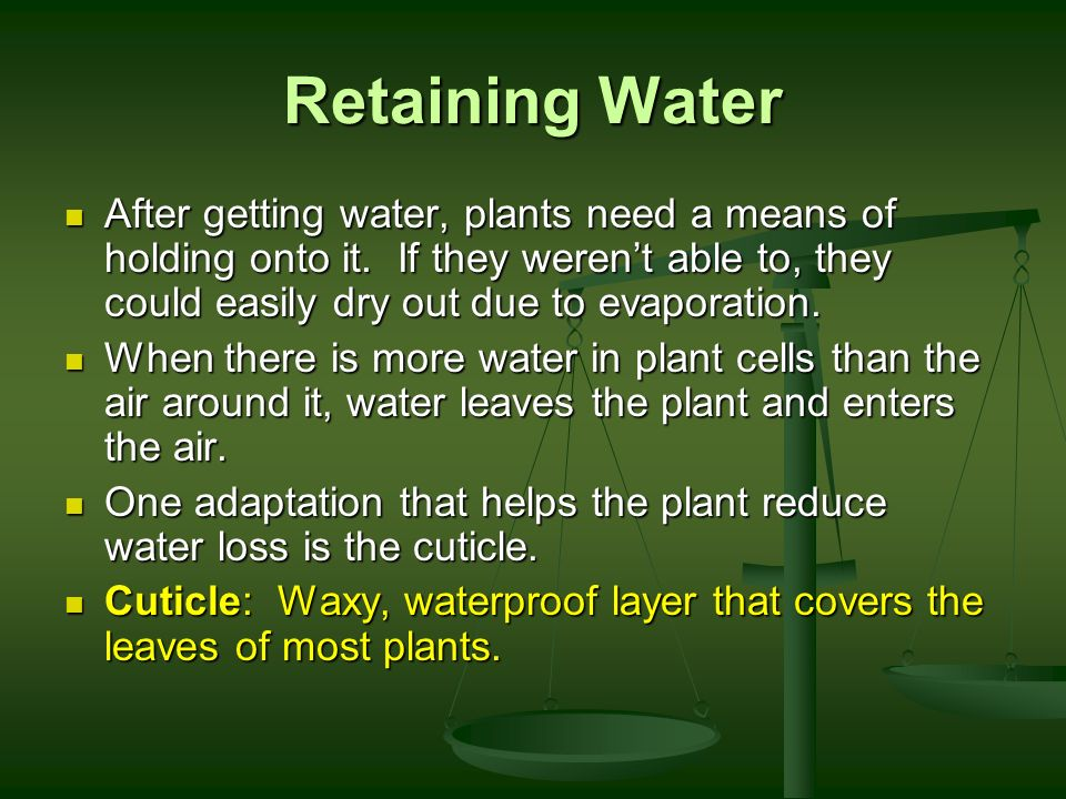 Retaining Water After getting water, plants need a means of holding onto it. If they weren't able to, they could easily dry out due to evaporation.