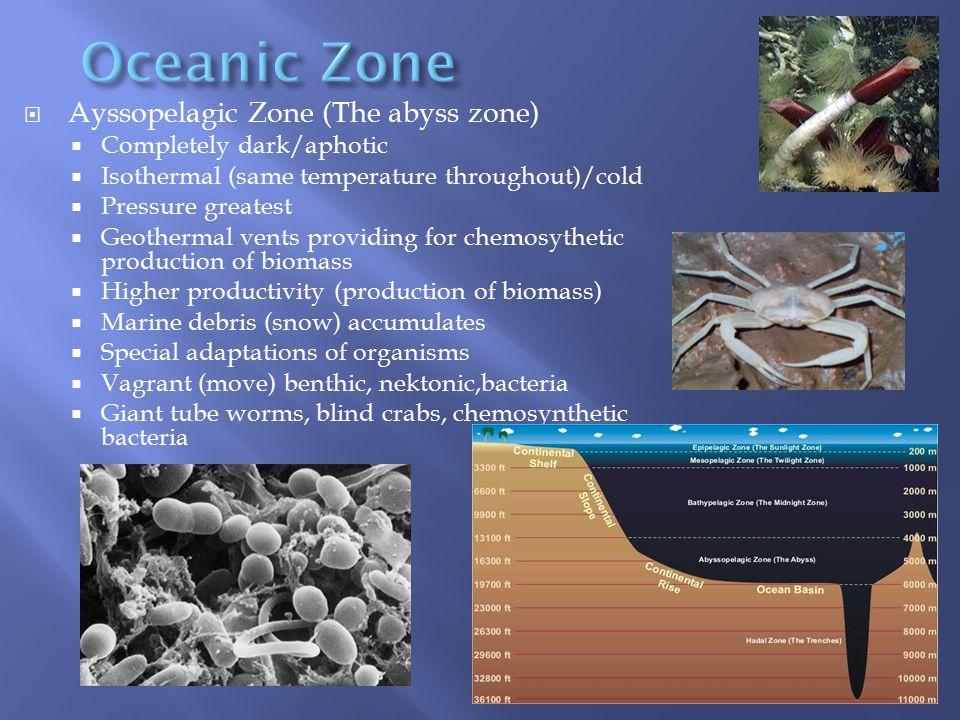 Oceanic Zone Ayssopelagic Zone (The abyss zone)