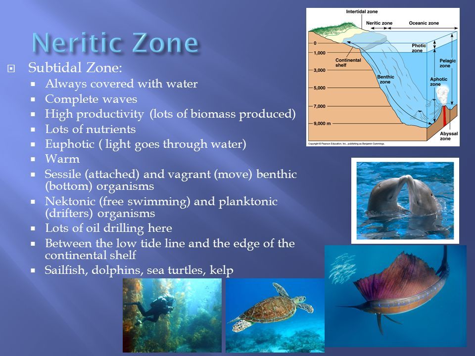 neritic zone The neritic zone is the part of the ocean that extends over the continental shelf, up to a depth of about 200 meters, where the slope of the shelf breaks this zone includes the pelagic area as.