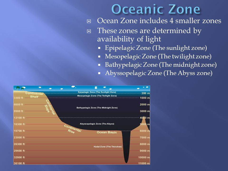 Oceanic Zone Ocean Zone includes 4 smaller zones