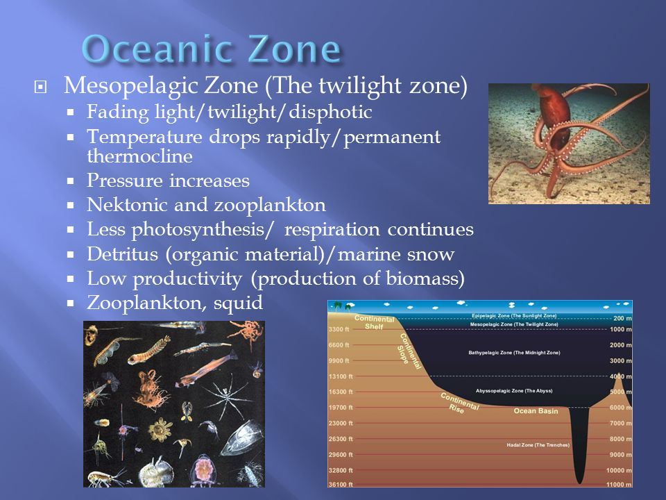 Oceanic Zone Mesopelagic Zone (The twilight zone)