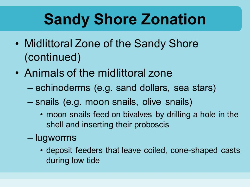 the characteristics of a sandy shore The characteristics of a sandy shore at pallarenda beach, townsville, north queensland essay, research paper the characteristics of a sandy shore at pallarenda beach, townsville, north queensland.