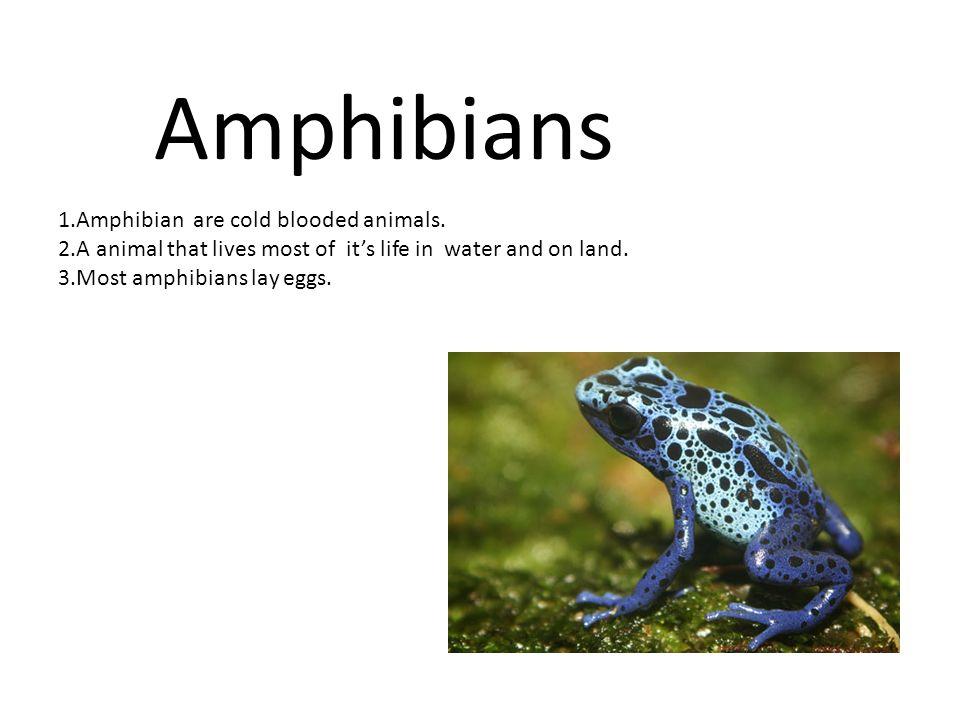 Amphibians 1.Amphibian are cold blooded animals. - ppt video online download