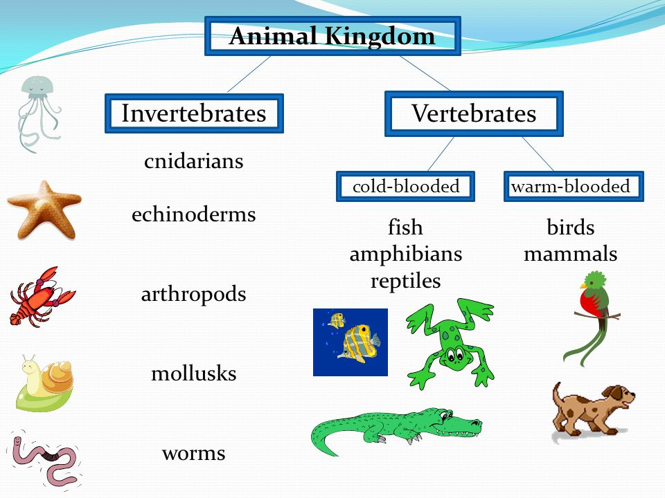 an overview of echinoderms birds and mammals 1625 species of fish, including 1400 coral reef species more than 3000 species of molluscs (shells) 630 species of echinoderm (starfish, sea urchins) 14 breeding species of sea snakes 215 species of birds including 22 species of seabirds and 32 species of shorebirds six of the world's seven species of marine turtle.