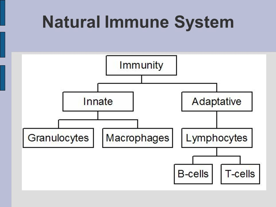Natural Immune System