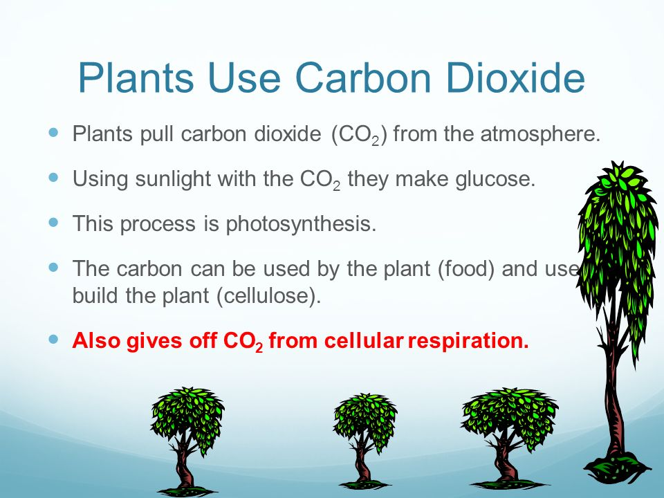 Plants Use Carbon Dioxide