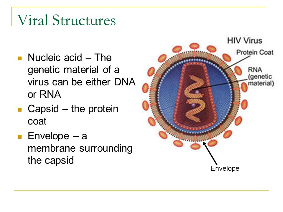 An analysis of the genetic material for virus