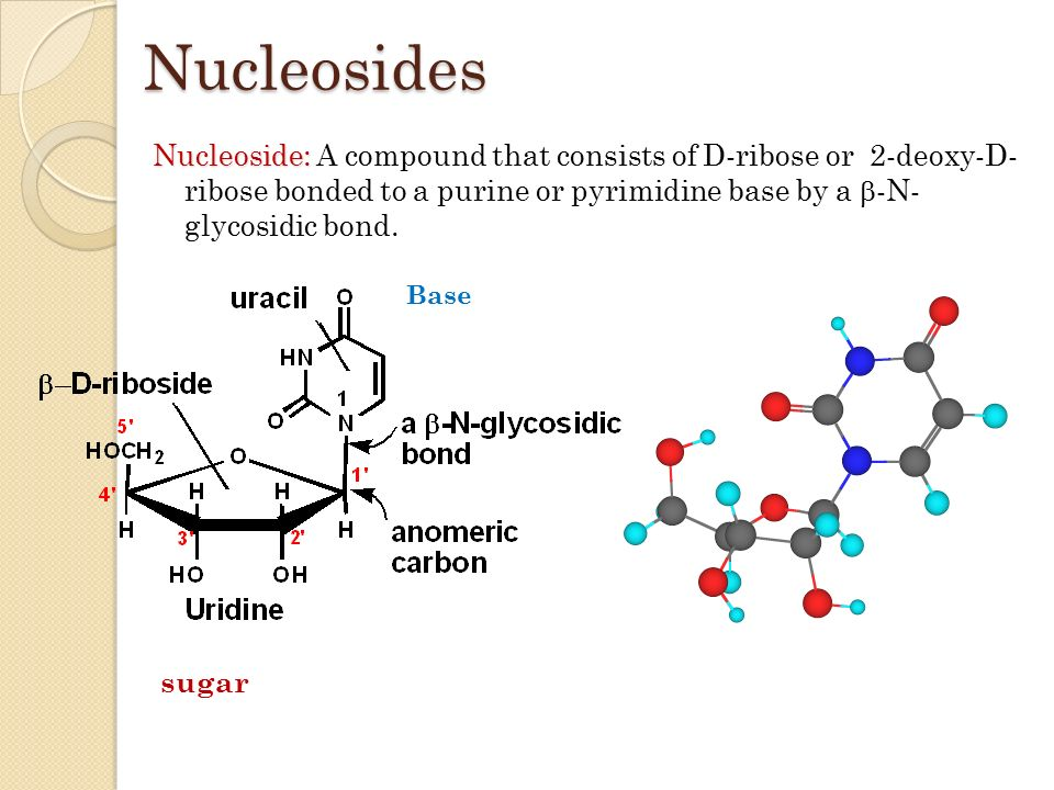 diagram of nucleotide and nucleoside images how to guide Deoxyribose Nucleotide Deoxyribose Model