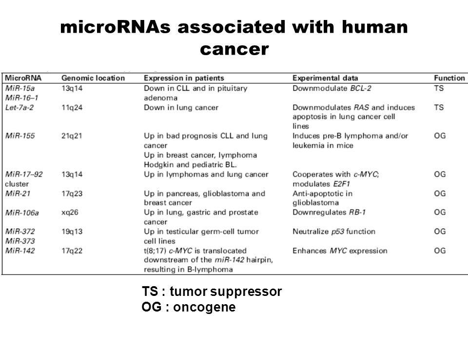 mirna 34 family tumor suppression potential in p53 network Despite very similar sequence similarities of the mir-34 family members the p53 tumour suppressor network a potential tumor suppressor.