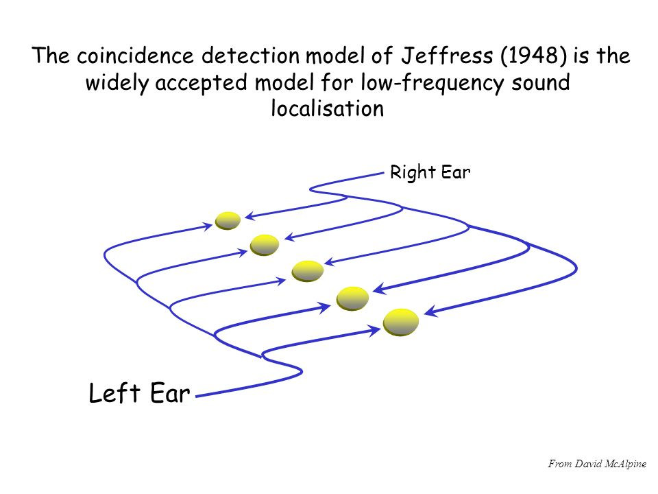 Left Ear The coincidence detection model of Jeffress (1948) is the