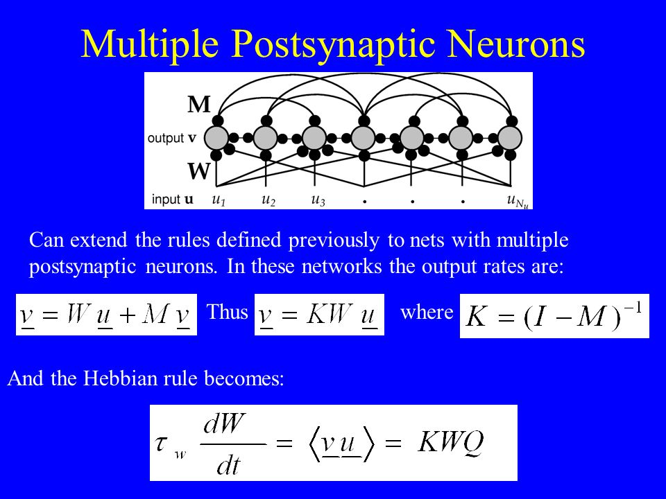 Multiple Postsynaptic Neurons
