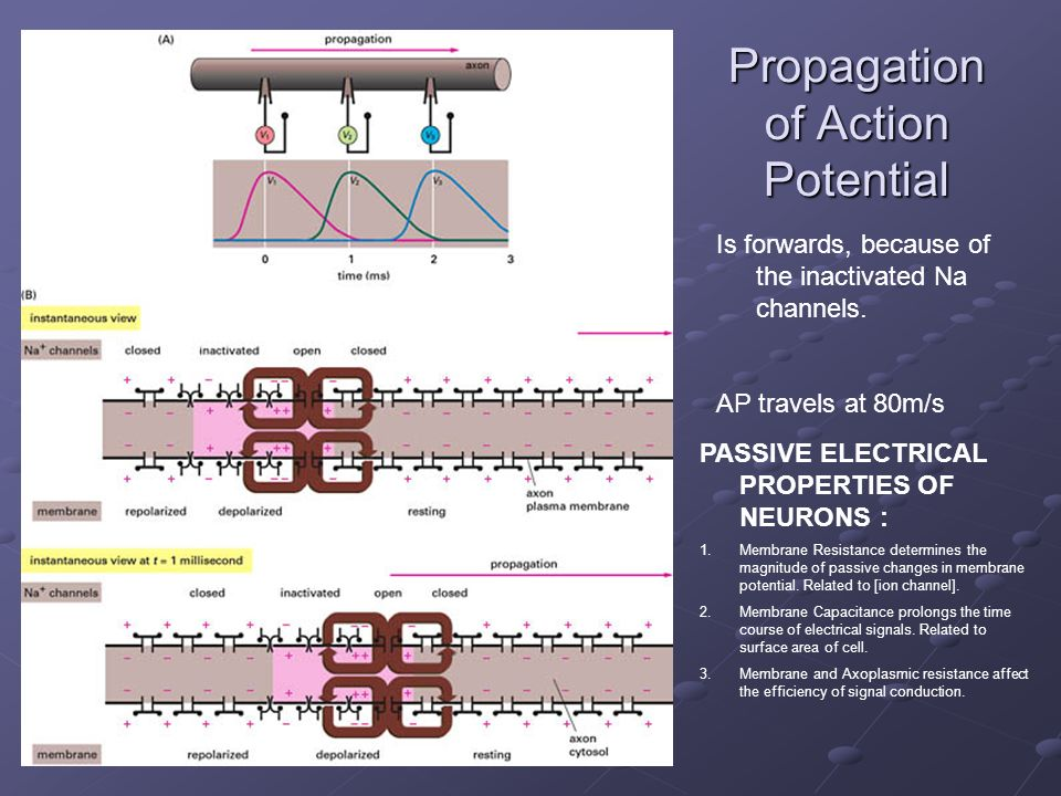 Propagation of Action Potential