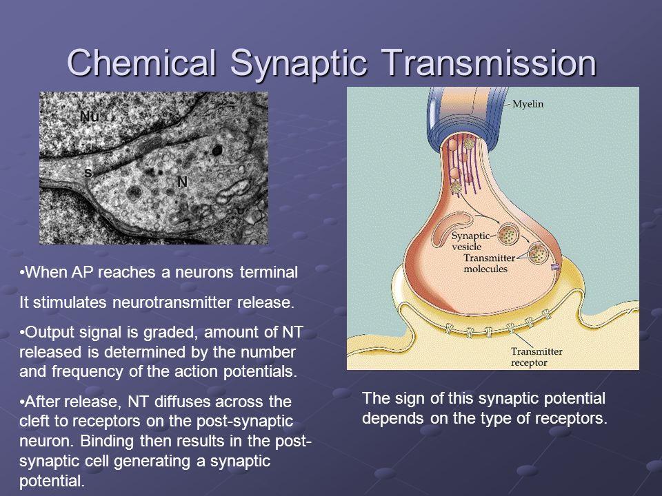 Chemical Synaptic Transmission