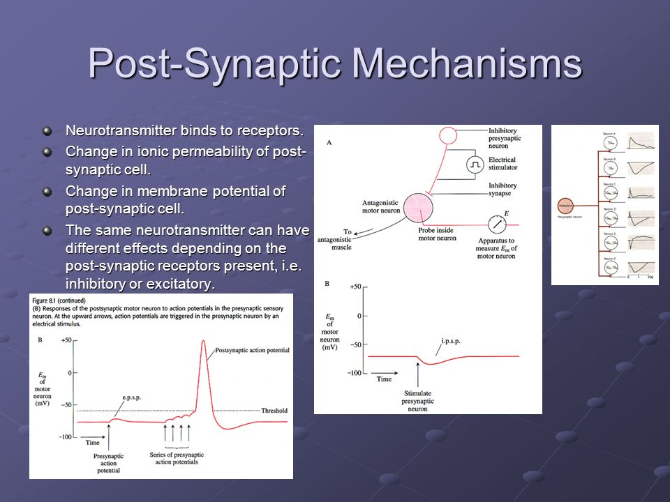 Post-Synaptic Mechanisms