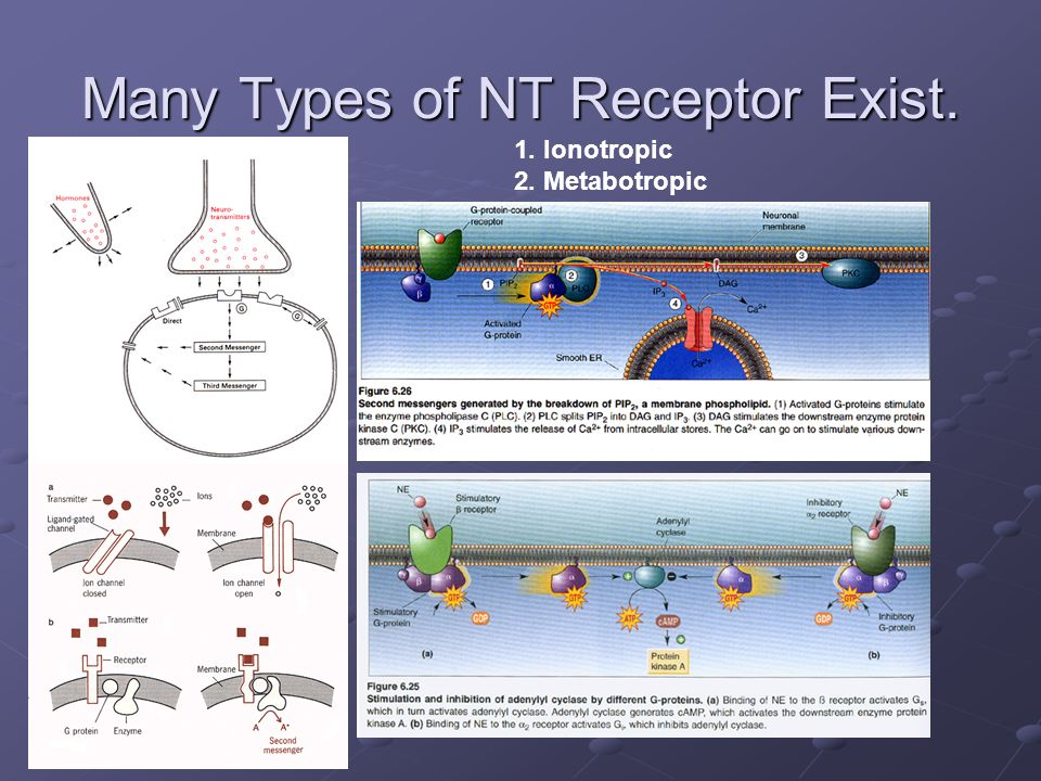 Many Types of NT Receptor Exist.