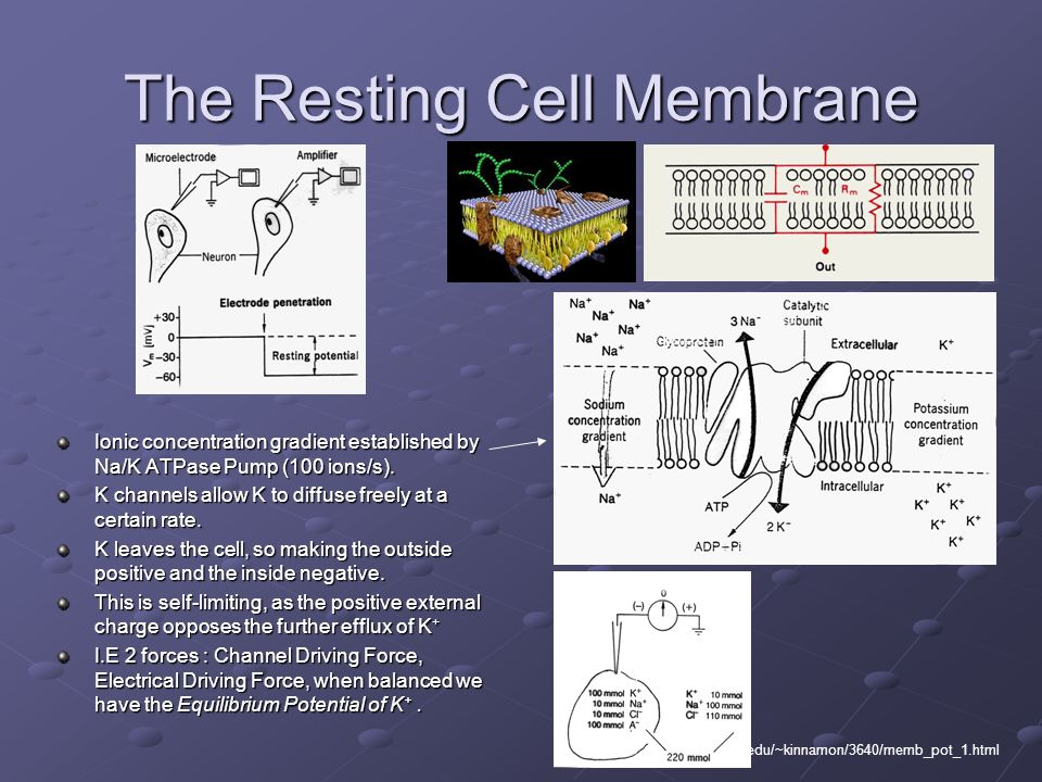 The Resting Cell Membrane