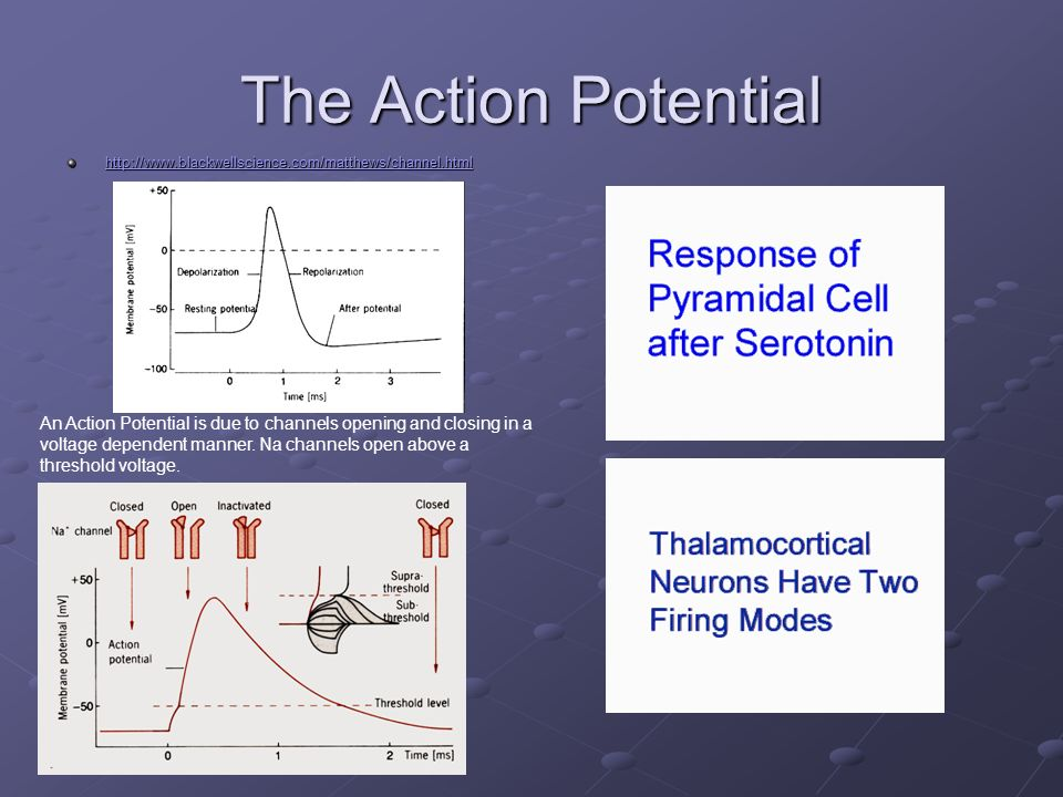 The Action Potential http://www.blackwellscience.com/matthews/channel.html.