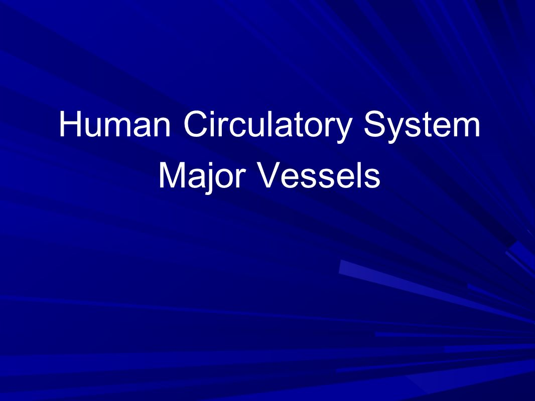 Human Circulatory System Major Vessels