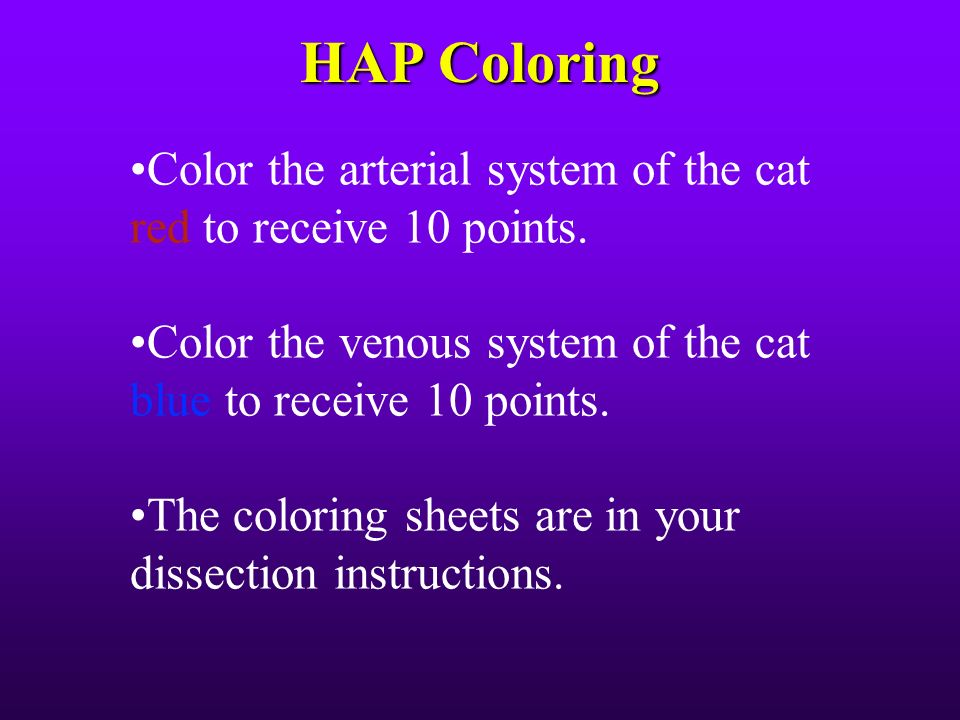 HAP Coloring OColor The Arterial System Of Cat Red To Receive 10 Points